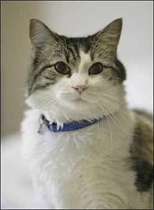 Oscar the Cat